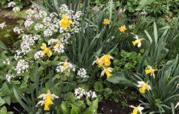 Календарь цветовода на май