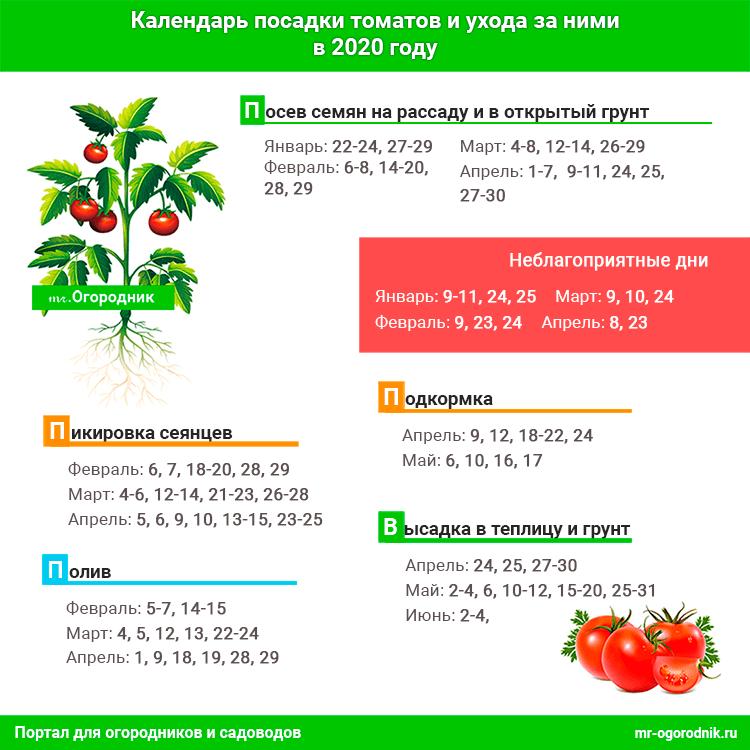 Инфографика: когда сажать томаты в 2020 году