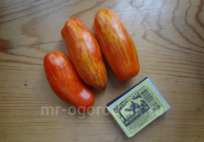 Сорт томата Джалпа